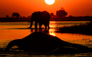 Слона то я и не приметил